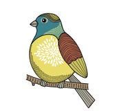 在分支的五颜六色的鸟 库存图片