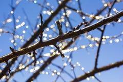 在分支的冰柱在蓝天在晴朗的冬日 免版税库存照片