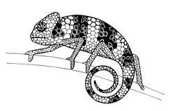 在分支的变色蜥蜴,墨水图画 库存图片