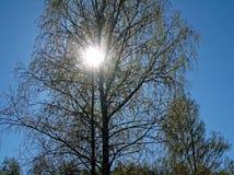 在分支的太阳 免版税库存图片