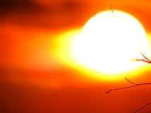 在分支的太阳 免版税库存照片