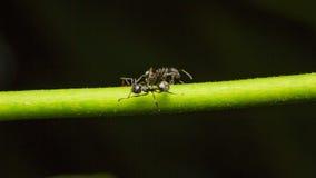 在分支的宏观蚂蚁 图库摄影