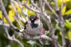在分支的小的鸟 免版税库存照片