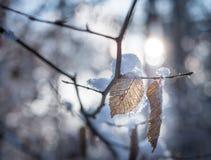 在分支的干叶子在冬天 免版税库存照片