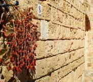 在分支的干旱时期在墙壁` s砂岩透视/纹理背景  免版税库存图片