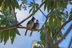 在分支的异乎寻常的鸟夫妇 免版税库存照片