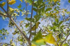 在分支的异乎寻常的鸟 免版税库存照片