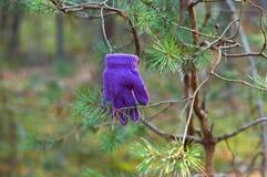 在分支的手套,失去手套 免版税图库摄影