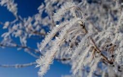 在分支的树冰 库存照片