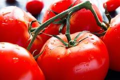 在分支的湿蕃茄 免版税库存图片