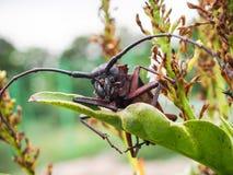 在分支的甲虫 库存图片
