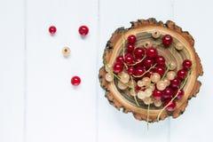 在分支的红色和白色无核小葡萄干 免版税库存照片