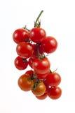 在分支的红色蕃茄 免版税库存照片