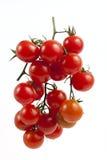 在分支的红色蕃茄 免版税库存图片