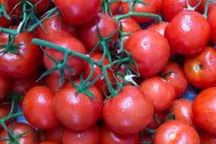在分支的红色,成熟蕃茄 库存照片