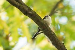 在分支的美丽的鸟 免版税库存照片