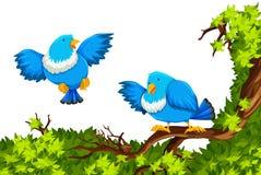 在分支的蓝色鸟 皇族释放例证