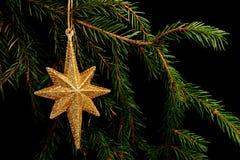在分支的集合红色圣诞节装饰,在黑背景 免版税库存照片