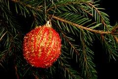在分支的集合红色圣诞节装饰,隔绝在黑背景 库存照片
