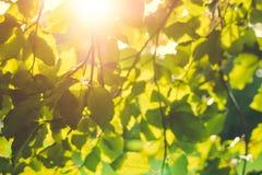 在分支的鲜绿色的叶子在秋天森林里 免版税库存图片