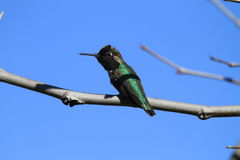 在分支的鸟 免版税库存照片