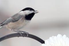 在分支的鸟 库存照片