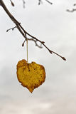 在分支的黄色秋天叶子 背景 免版税图库摄影