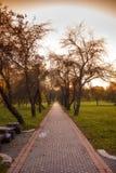 在分支,与太阳的秋天木头的金黄叶子发出光线 免版税库存图片