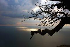 在分行海运日出结构树之上 免版税库存照片
