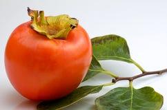 在分行的亚洲柿树 免版税库存图片