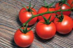 在分行的红色蕃茄 免版税库存照片