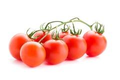 在分行的蕃茄 免版税库存照片