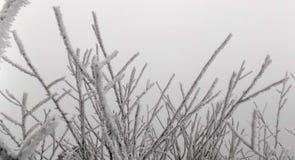 在分行的雪 背景美丽的森林 33c 1月横向俄国温度ural冬天 库存照片
