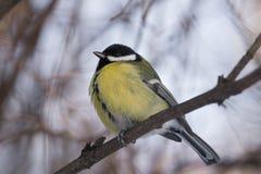 在分行的鸟 免版税库存图片