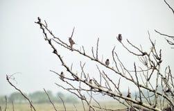 在分行的鸟 免版税库存照片