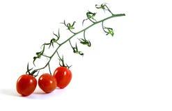 在分行的3个蕃茄樱桃   免版税库存图片