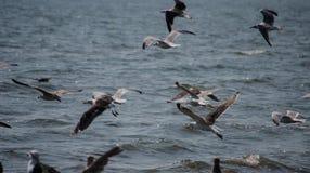 在切塞皮克湾的鸟 免版税库存图片