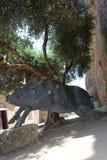 在切尔韦泰里正方形,地方烹调的标志的野公猪纪念碑SU scrofa 免版税库存照片