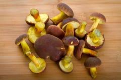在切板的森林蘑菇 免版税图库摄影