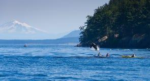 在划独木舟的人附近的跳跃的海怪鲸鱼 免版税图库摄影