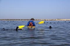 在划皮船的鹈鹕点附近 免版税库存照片