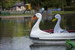 在划船湖的天鹅pedalos 库存图片