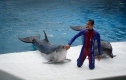 在创造性的有趣的展示的海豚 库存照片