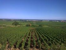 在利昂,法国附近的葡萄园 图库摄影