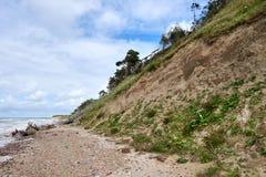 在利耶帕亚,拉脱维亚附近的波罗的海海岸线 与杉树的沙丘 古典波儿地克的海滩风景 松鸡爱本质歌曲通配木头 库存图片