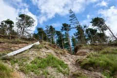 在利耶帕亚,拉脱维亚附近的波罗的海海岸线 与杉树的沙丘 古典波儿地克的海滩风景 松鸡爱本质歌曲通配木头 库存照片