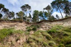 在利耶帕亚,拉脱维亚附近的波罗的海海岸线 与杉树的沙丘 古典波儿地克的海滩风景 松鸡爱本质歌曲通配木头 免版税库存照片