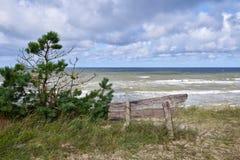 在利耶帕亚,拉脱维亚附近的波罗的海海岸线 与杉树的沙丘 古典波儿地克的海滩风景 松鸡爱本质歌曲通配木头 免版税库存图片