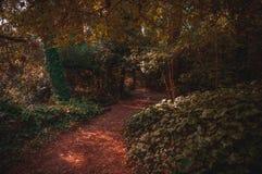 在别墅里面格塞尔森林的红色足迹  库存照片