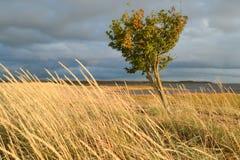 在刮风的天气的树 免版税库存照片